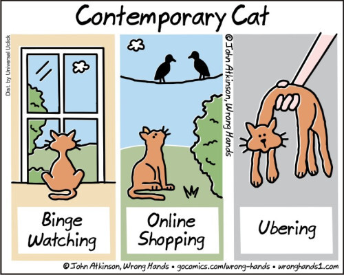 contemporary-cat.jpg