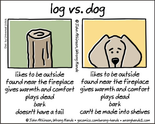 log-vs-dog.jpg